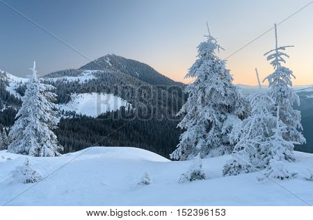 Winter landscape in the mountains. Fir trees and forest on the slopes. Morning twilight before dawn. Carpathians, Ukraine, Europe