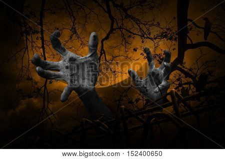 Zombie hand rising out from old fence over dead tree crow moon and cloudy sky Spooky background Halloween concept