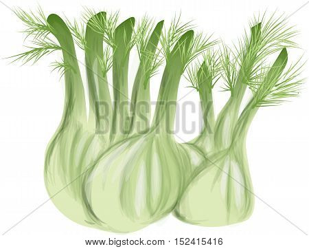 fennel with leaves isolated on white background