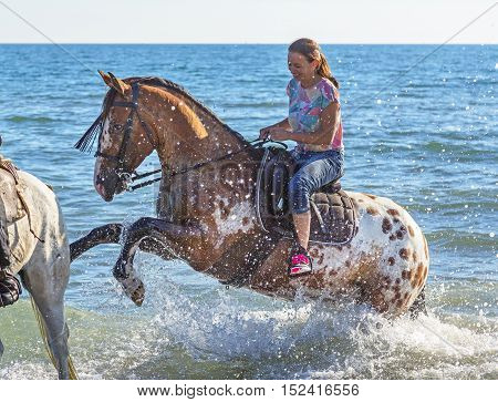 woman and appaloosa horse walking on the beach