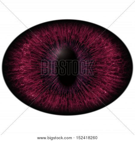 Albino Dark Red Eye With Large Pupil And Dark Retina