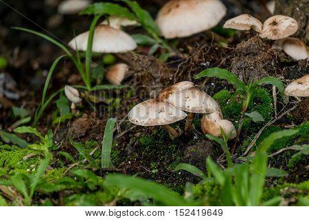 Mushroom on Timber  in garden at morning