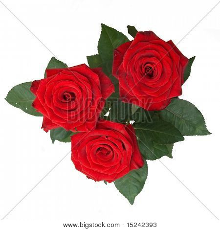 three rred roses on white