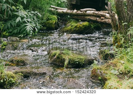 Forest and creek in the summer. Wild forest stream.