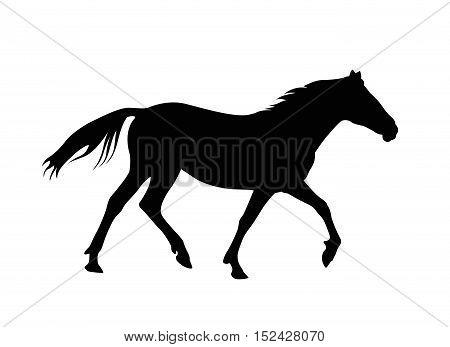 Silhouette of running horse. Black on white. Vector illustration