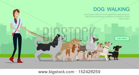 Dog walking banner. Woman walks with Golden Retriever, Jack Russell Terrier, Maremma Sheepdog, Cavalier King Charles Spaniel, Pekingese, Doberman Pinscher breeds. Dog pet shop banner poster. Vector.