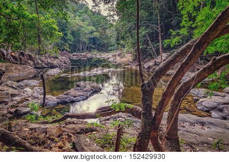 Small mountain stream in the shade of the tropical forest with snag tree in the foreground, Mu Koh Chang National Park, Chang island, Thailand. Natural background.