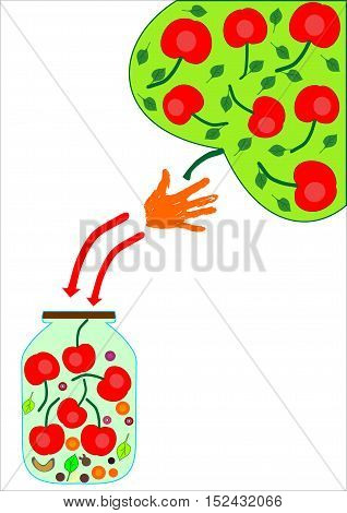 Infographics beverage cherry berries in a glass jar abstract background vector illustration