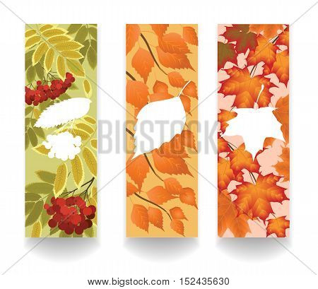 Three vertical banner with autumn leaves of maple rowan and birch trees vector illustration