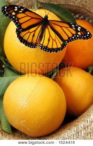 Monarch butterfly on juicy oranges in wicker hat poster
