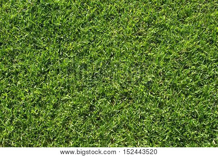 Green grass background, Green grass soccer field, Close-up image of fresh spring green grass.
