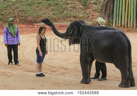 Tourist Get Closer To Asian Elephant