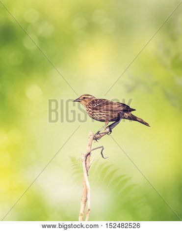 Brown Bird Perches on a Branch