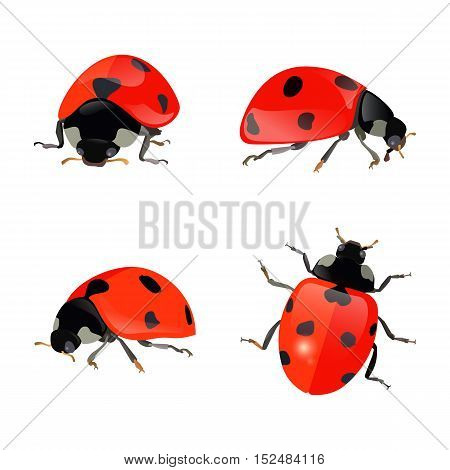 Set of hand drawn ladybugs. Vector ladybirds collection. eps10