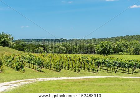 Small roadside wine vineyard in the Texas Hill Country.