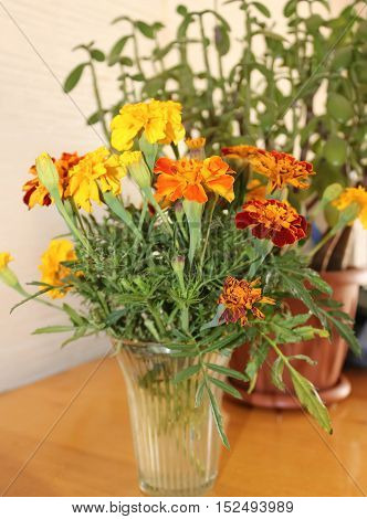 Small bouquet of marigolds in a vase