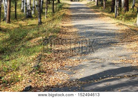 The sidewalk with fallen leaves in the park in the fall