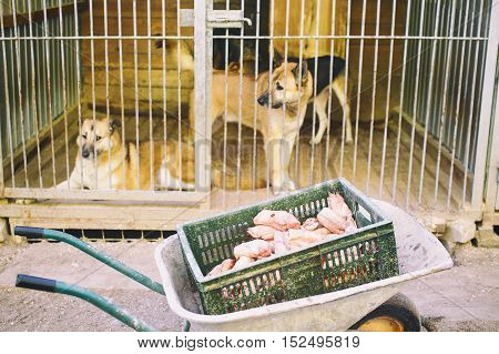 feeding the dogs at the shelter. dogs in cages. wheelbarrow with meat for stray animals