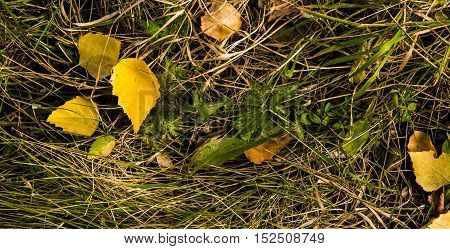 Grass, green grass and yellow leaves, dry grass, colors of autumn, grunge grass background, grunge nature, hello autumn mood, autumn background, yellow grass