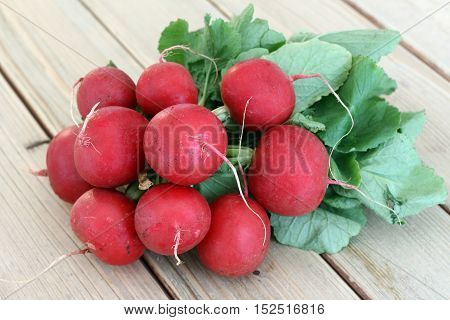 Detail of the bunch fresh radish - vegetable