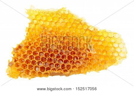 Honey bee wax honeycomb cells with honey isolated on a white background