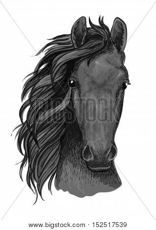 Grey horse sketch of arabian stallion head with muscular neck. Horse racing mascot, riding club symbol or t-shirt print design