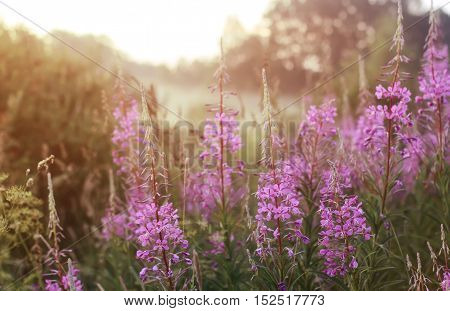 beautiful colorful flowers in the meadow in the light of the sun of summer times