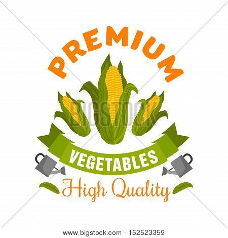 Organic corn vegetable sign of fresh maize cobs with green leaves, decorated by ribbon banner with watering can and header Premium. Agriculture harvest theme, farm market symbol design