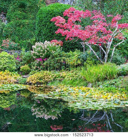 Amazing floral park Butchart Gardens on Vancouver Island. In a small pond, overgrown with lilies, reflected trees and flowers