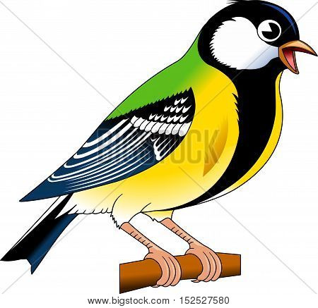 Tomtit bird. Titmouse. Vector illustration of tomtit isolated on white background