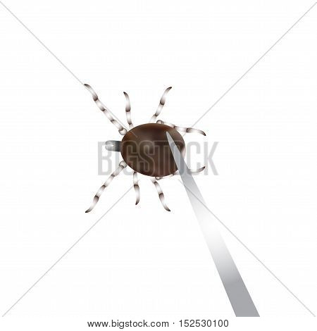Remove mite with special tools. Mite parasites. Vector illustration