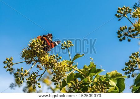 Butterfly Vanessa Cardui On A Flower