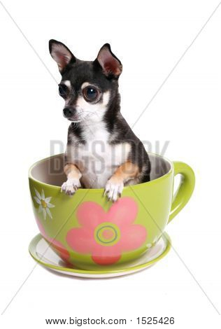Tiny Dog In Big Tea Cup
