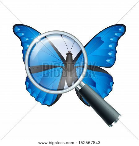 Magnifying glass and butterfly, education concept. Scientific biology, study nature, vector illustration