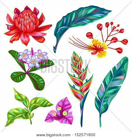 Set of Thailand flowers. Tropical multicolor plants, leaves and buds.