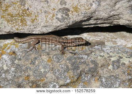 lizard sitting on a stone in the sunshine