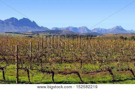 Grape Farm, Stellenbosch, Cape Town South Africa 11asw