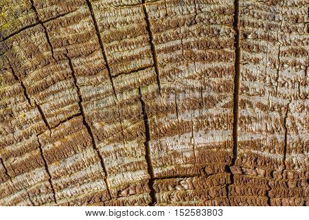 Closeup of details in old tree stump