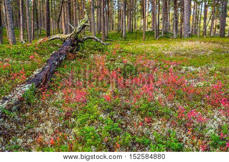 Autumnal colors and fallen tree in forest landscape