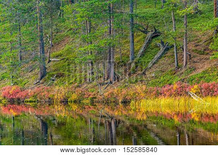 Two old fallen trees in autumnal forest landscape