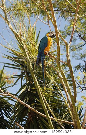 Tropical parrot in a tree watching neighborhood