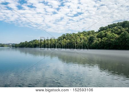 River bank with green trees near clear water and blue skies