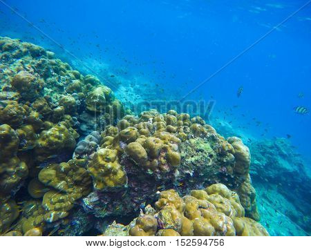 Tropical sea and coral reef underwater landscape. Oceanic life. Seaside plants and animals. Exotic undersea view during snorkeling in warm water of asian island. Yellow corals and blue sea water