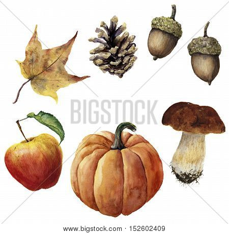 Watercolor autumn harvest set. Hand painted pine cone, acorn, pumpkin, apple, mushroom and yellow leaf isolated on white background. Botanical illustration for design.