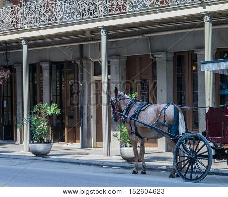 Horse drawn carriage takes a pause near businesses in New Orleans French Quarter - Louisiana