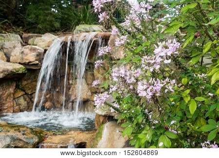 Tumbling waterfall in spring near pink blossoms and lush green foliage