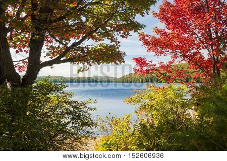 Fall forest trees with colorful autumn foliage on calm blue lake shore in Algonquin Provincial Park, Canada
