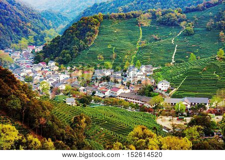 High view of Longjing tea fieldS and village area