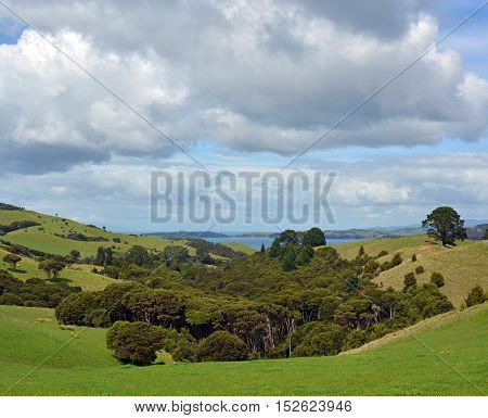 Vertical panoramic view of Native Bush and stormy sky at Stony Batter on Waiheke Island Auckland New Zealand