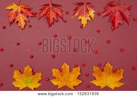 Autumn colorful fallen maple leaves in a row and berries on claret background with copy space